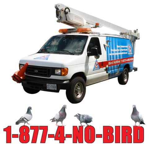 Pigeon Patrol Bird Control Mobile Unit Services
