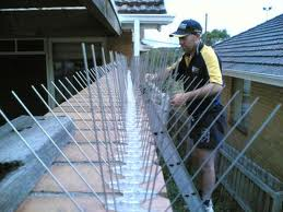 Pigeon Patrol spikes are an effective way to keep the birds away