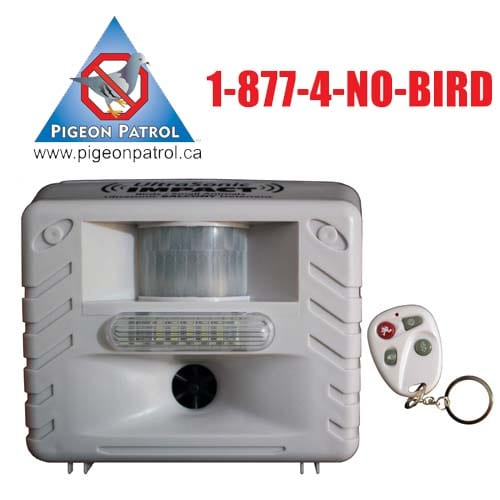 Pigeon Patrol, Pigeon Deterrent, bird control, pigeon control, bird repellent, bird proof, bird contrl, sound unit, netting bird, bird netting, spikes, pointy things, Ultra-Flex Bird Spikes, bird deterrent, bird spike, bird control, spikes, bird repellent spikes, bird deterrent spikes, steel bird spikes, bird netting, bird control, netting bird, bird repellent, pigeon control, bird proof, bird problems, bird proofing, bird repellers, bird control systems, anti bird, 1-877-4-no-bird, no bird, nobird, bird lazers, bird lasers bird lasers, sonic bird repellers, ultrasonic bird repellers, Get rid of pigeons, pigeon problems, pigeon control system, Keep Pigeons Off, Canada, USA, Manufacturer  bird control, Bird Control Products, bird deterrent, bird net, bird netting, bird removal, bird repellent, bird spike strips, bird spikes, birds off, building maintenance, building maintenance birds, building maintenance tips, get rid of birds, how to get rid of birds, pigeon control, scare birds, stop bird, High frequencies, ultrasonic ,sonic , sound waves ,roof tops, ledges, balconies, buildings ,warehouses, bird sound deterrents, physical bird deterrents ,visual bird deterrents, disinfectant, Tubesonic, keep birds out, pest bird, how to get rid of bird, electric shock, bird deterrent system, keep birds away, pest bird problems, plastic bird spikes, scare birds, bird off get, suppliers of bird control,