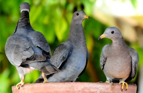 Pigeon Patrol, Pigeon Deterrent, bird control, pigeon control, bird repellent, bird proof, bird contrl, sound unit, netting bird, bird netting, spikes, pointy things, Ultra-Flex Bird Spikes, bird deterrent, bird spike, bird control, spikes, bird repellent spikes, bird deterrent spikes, steel bird spikes, bird netting, bird control, netting bird, bird repellent, pigeon control, bird proof, bird problems, bird proofing, bird repellers, bird control systems, anti bird, 1-877-4-no-bird, no bird, nobird, bird lazers, bird lasers bird lasers, sonic bird repellers, ultrasonic bird repellers, Get rid of pigeons, pigeon problems, pigeon control system, Keep Pigeons Off, Canada, USA, Manufacturer  bird control, Bird Control Products, bird deterrent, bird net, bird netting, bird removal, bird repellent, bird spike strips, bird spikes, birds off, building maintenance, Integrated Pest Supplies Ltd, Pest Control Products, New Westminster, BC,building maintenance birds, building maintenance tips, get rid of birds, how to get rid of birds, pigeon control, scare birds, stop bird, High frequencies, ultrasonic ,sonic , sound waves ,roof tops, ledges, balconies, buildings ,warehouses, bird sound deterrents, physical bird deterrents ,visual bird deterrents, disinfectant, Tubesonic, keep birds out, pest bird, how to get rid of bird, electric shock, bird deterrent system, keep birds away, pest bird problems, plastic bird spikes, scare birds, bird off get, suppliers of bird control, Integrated Pest Control, intergraded, intergratedpestsupplies,