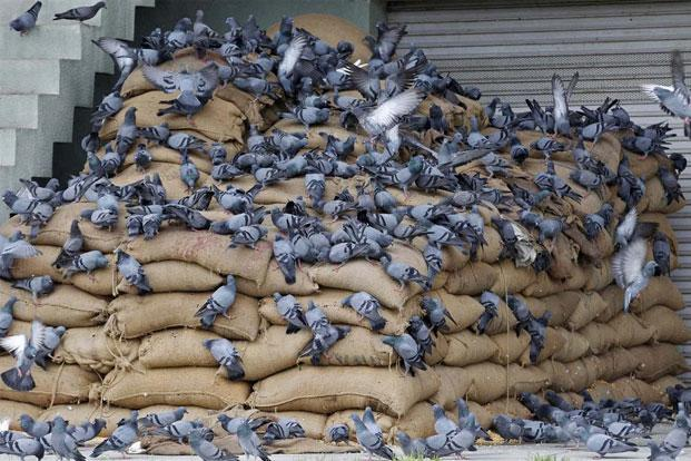 Bird Netting Pigeon Patrol Canada Bird Control