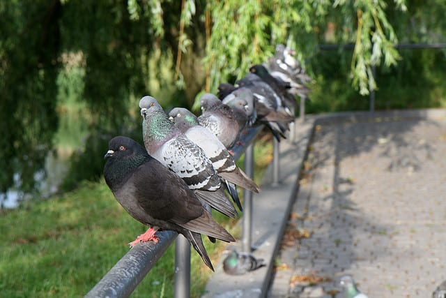 Piano Wire Finds Unexpected Use In Chasing Birds Away In