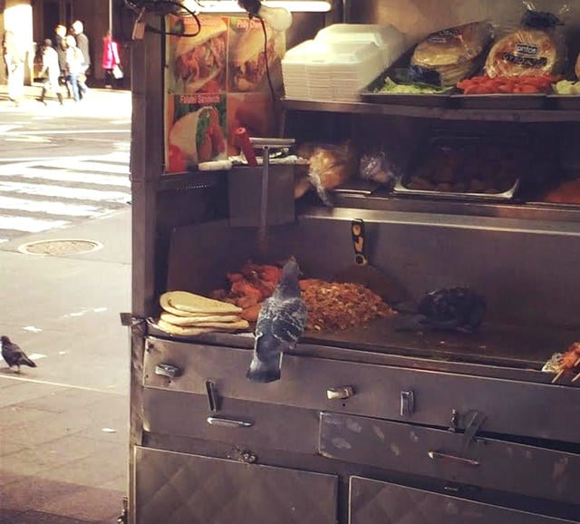 Pigeons Spotted Feasting On Times Square Street Meat Cart