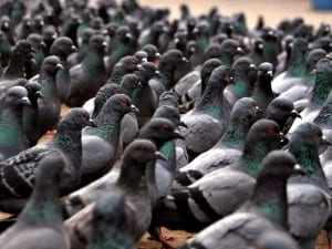 This Town Is Covered in Pigeon Shit