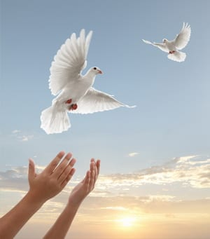 the more you know symbolic meaning of releasing white pigeons