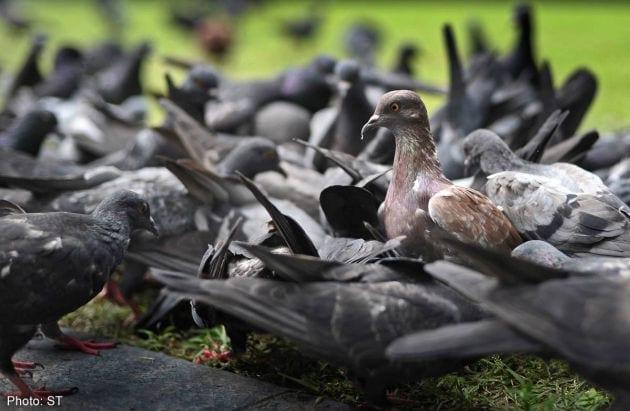 Ultrasonic Bird Repeller Archives Pigeon Patrol Canada