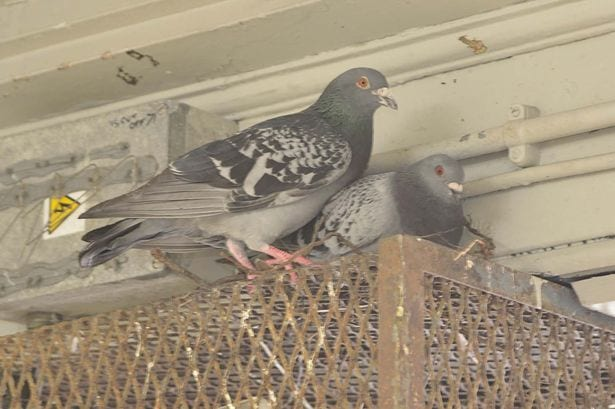 Pigeon Patrol, Pigeon Deterrent, bird control, pigeon control, bird repellent, bird proof, bird contrl, sound unit, netting bird, bird netting, spikes, pointy things, Ultra-Flex Bird Spikes, bird deterrent, bird spike, bird control, spikes, bird repellent spikes, bird deterrent spikes, steel bird spikes, bird netting, bird control, netting bird, bird repellent, pigeon control, bird proof, bird problems, bird proofing, bird repellers, bird control systems, anti bird, 1-877-4-no-bird, no bird, nobird, bird lazers, bird lasers bird lasers, sonic bird repellers, ultrasonic bird repellers, Get rid of pigeons, pigeon problems, pigeon control system, Keep Pigeons Off, Canada, USA, Manufacturer  bird control, Bird Control Products, bird deterrent, bird net, bird netting, bird removal, bird repellent, bird spike strips, bird spikes, birds off, building maintenance, Integrated Pest Supplies Ltd, Pest Control Products, New Westminster, BC,building maintenance birds, building maintenance tips, get rid of birds, how to get rid of birds, pigeon control, scare birds, stop bird, High frequencies, ultrasonic ,sonic , sound waves ,roof tops, ledges, balconies, buildings ,warehouses, bird sound deterrents, physical bird deterrents ,visual bird deterrents, disinfectant, Tubesonic, keep birds out, pest bird, how to get rid of bird, electric shock, bird deterrent system, keep birds away, pest bird problems, plastic bird spikes, scare birds, bird off get, suppliers of bird control, Integrated Pest Control, intergraded, intergratedpestsupplies, pigeon spikes, bird spikes, pigeon deterrent, get rid of pigeons, pigeon control, bird spike, pigeon deterrents, how to get rid of pigeons, bird strike, Pigeon Patrol,  bird control, bird netting, spikes, bird deterrent, bird spike, bird control