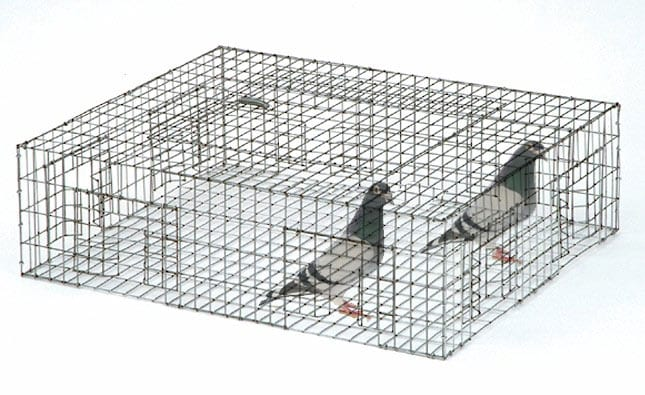 birds trapping