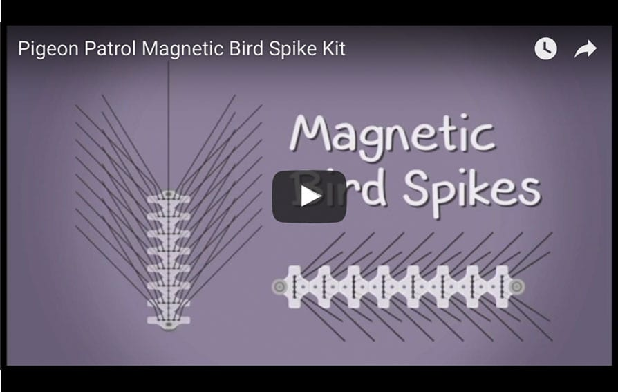 Magnetic Bird Spikes