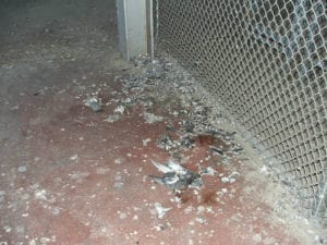 Tired of the sticky problem of pigeon poop?