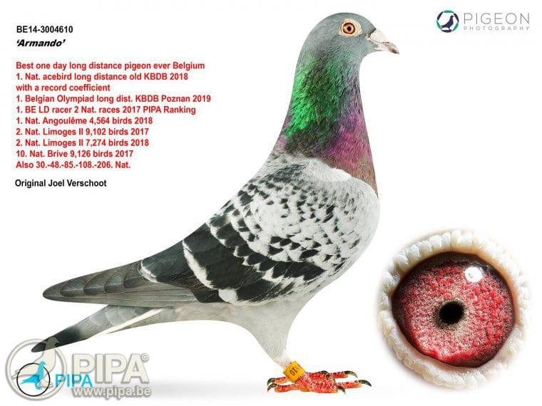 Should I be concerned of pigeons?