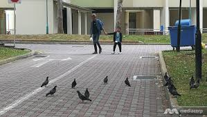 A man and child walk among a flock of hungry pigeons