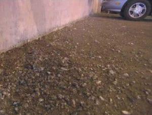 Pigeon poop in parking garage
