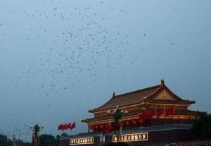 Birds flying over Beijing China