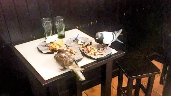 Open-Air Pigeon Nest Closes Popular Mission Taqueria