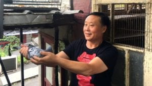 Inside the fascinating and sometimes brutal world of pigeon racing in China