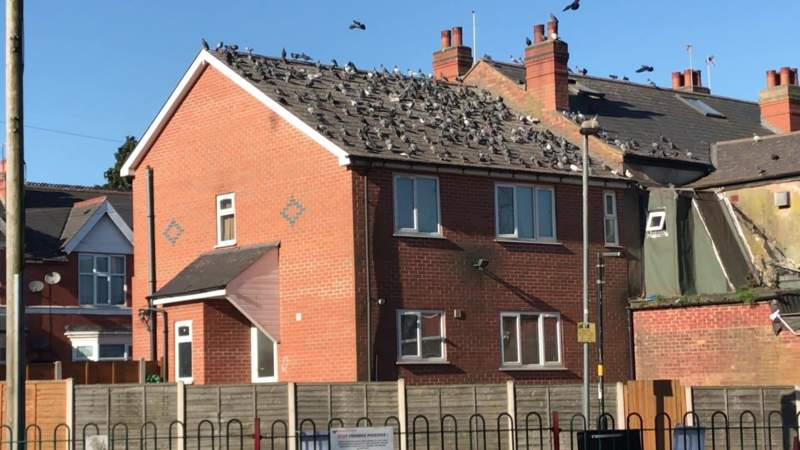 Derelict house could help target problem pigeons