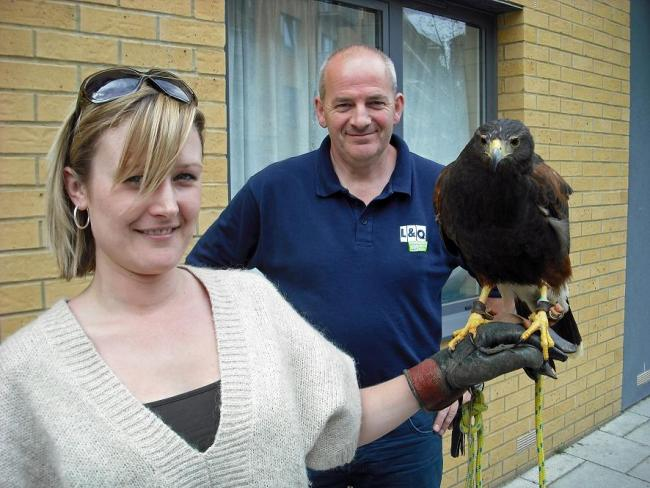 Housing bosses set to use a hawk to keep nuisance pigeons away