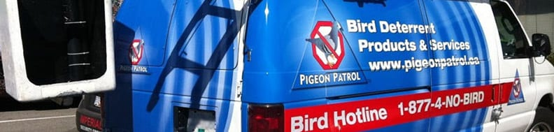 Pigeon-Deterrent-and-Removal-Services