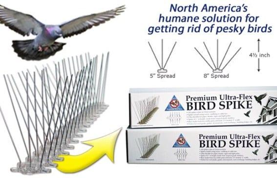 bird-spikes-1