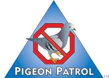 pigeon-patrol-canada-bird-spikes