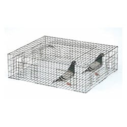 pigeon-trapping
