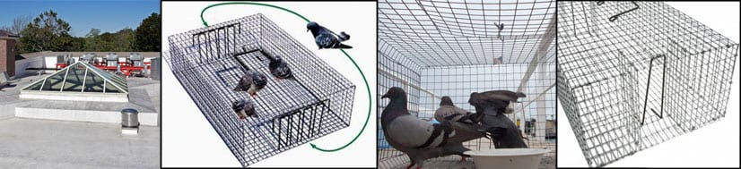 pigeon-trapping-footer-1