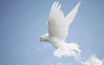 Pigeons In Religions