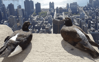 3 More Facts About Pigeons