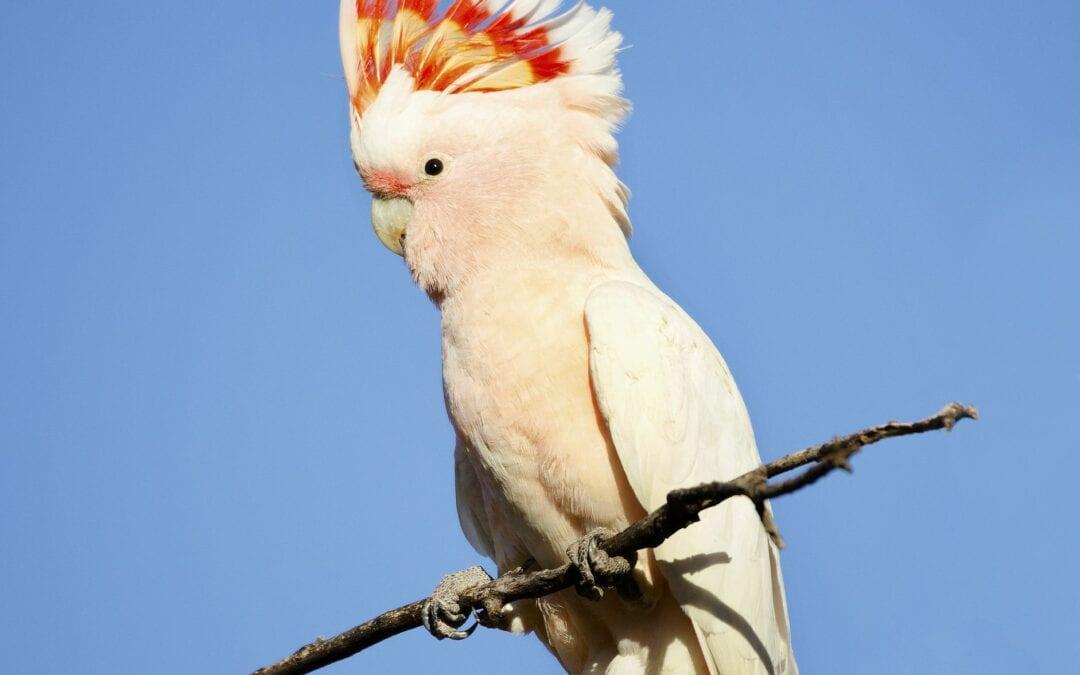 Smartest Birds In The World