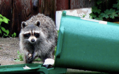 How To Keep Raccoons Away From Trash