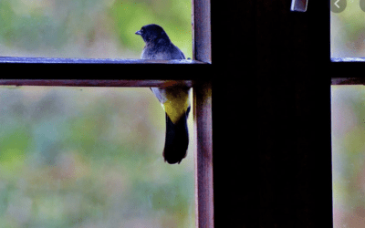 What To Do About Birds That Get In Your House