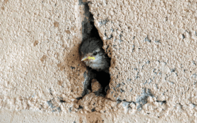 What Do I Do With a Bird Trapped in My Wall?