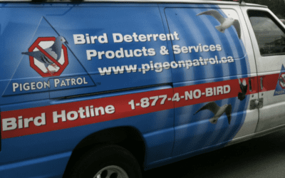 Why You Should Hire A Professional Bird Control Company