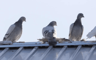 Keep The Birds Away From Your Business