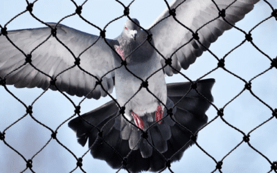 Why You Should Get Bird Netting