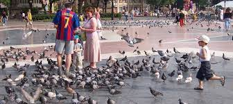 5 of a family die in attempt to save pigeon