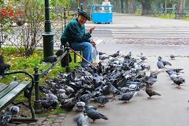 When in Venice, please don't feed the pigeons
