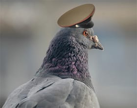 Pigeons at risk of starvation over coronavirus empty streets